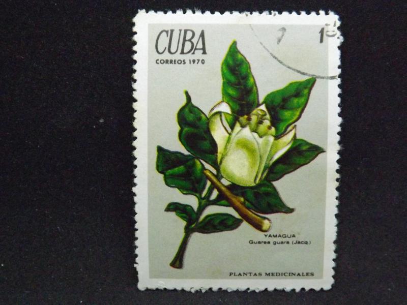 Images Of Flowers In St Vincent Cape Verde Islands